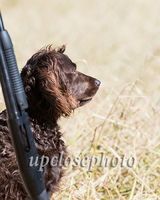 BOYKIN SPANIEL SOCIETY NATIONAL FIELD TRIAL