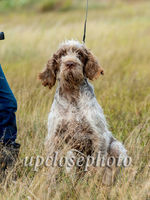 Spinone3_022_G19F