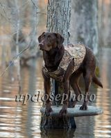 Larry McMurry Hunt 1/15/14