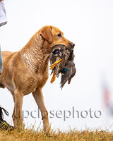 2020 National Retriever Championship