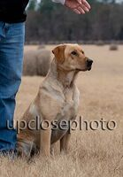 TFKpurina_Virginia_022_121720_w