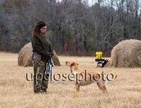 TFKpurina_Virginia_030_121720_w