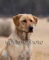 TFKpurina_Virginia_019_121720_w