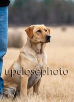 TFKpurina_Virginia_017_121720_w