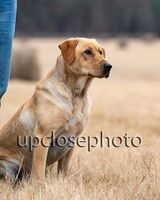 TFKpurina_Virginia_016_121720_w
