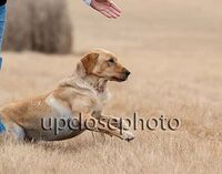 TFKpurina_Virginia_004_121720_w